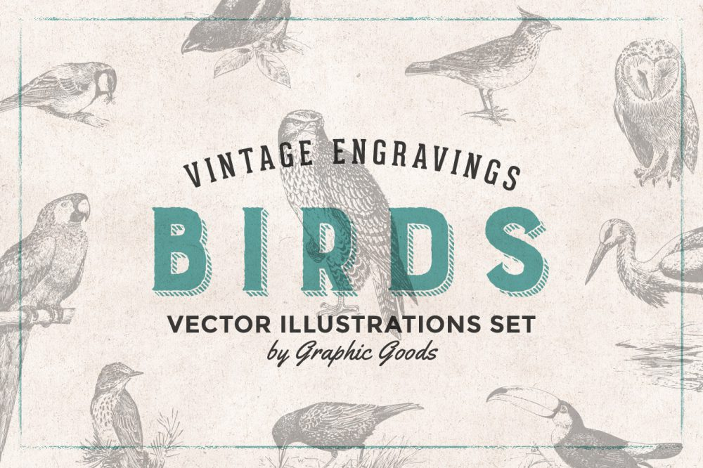 Birds – Vintage Engraving Illustrations 01