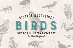 Birds – Vintage Engravings Set