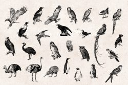 Birds – Vintage Engraving Illustrations 04