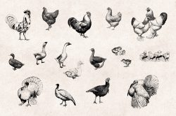 Farm Animals – Vintage Engraving Illustrations 02