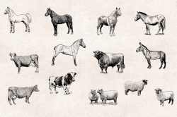 Farm Animals – Vintage Engraving Illustrations 03