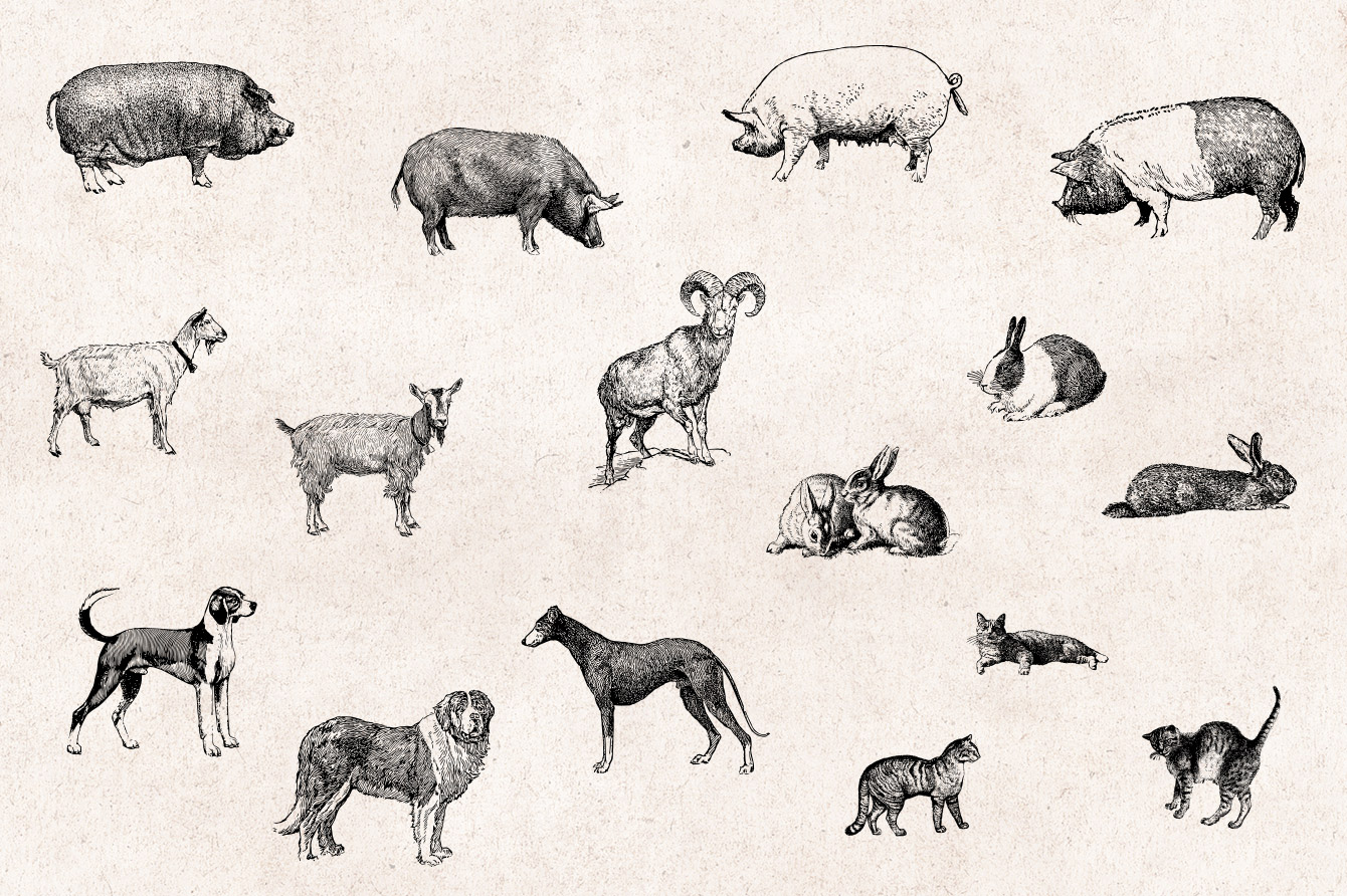 Vector Line Art Animals : Farm animals engraving vector set graphic goods