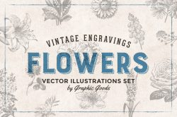 Flowers Vintage Illustrations 01