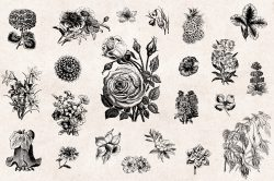 Flowers Vintage Illustrations 03