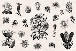 Flowers Vintage Illustrations 04