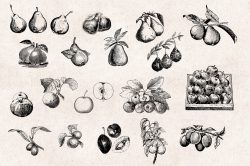 Fruits – Vintage Engraving Illustrations 03