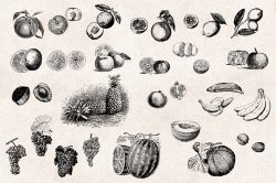 Fruits – Vintage Engraving Illustrations 04