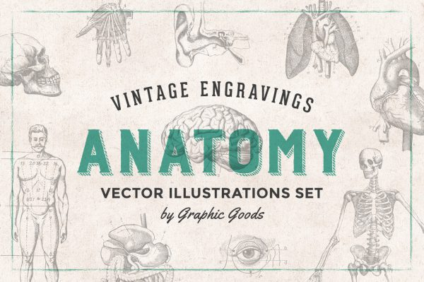 Human Anatomy – Vintage Engraving Illustrations 01