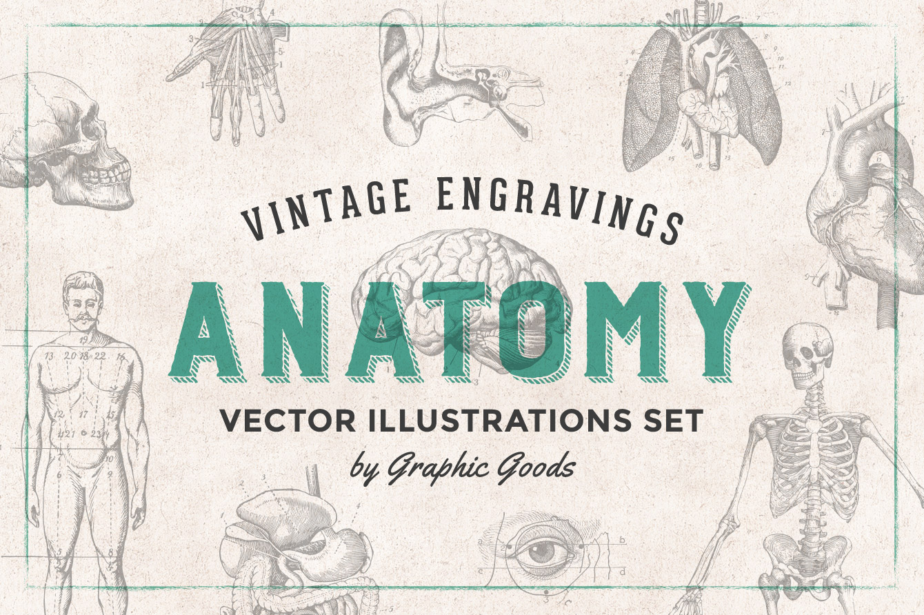 Anatomy Engravings Set Graphic Goods