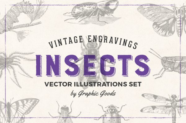 Insects – Vintage Engraving Illustrations 01