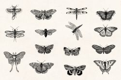 Insects – Vintage Engraving Illustrations 04