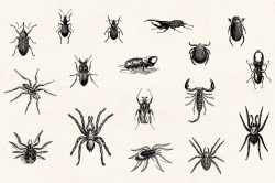 Insects – Vintage Engraving Illustrations 05