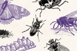 Insects – Vintage Engraving Illustrations 06