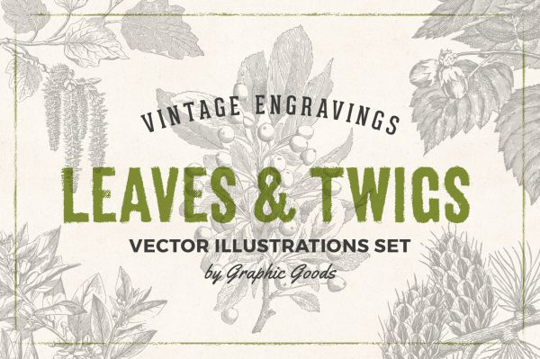 Leaves & Twigs – Vintage Engraving Illustrations 01
