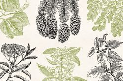 Leaves & Twigs – Vintage Engraving Illustrations 02