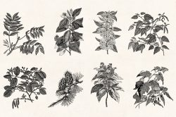 Leaves & Twigs – Vintage Engraving Illustrations 03
