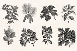 Leaves & Twigs – Vintage Engraving Illustrations 04