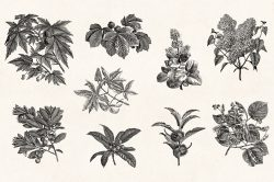 Leaves & Twigs – Vintage Engraving Illustrations 05