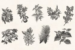 Leaves & Twigs – Vintage Engraving Illustrations 06