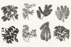 Leaves & Twigs – Vintage Engraving Illustrations 08