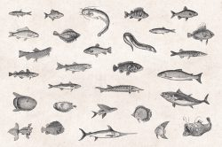 Sea Life – Vintage Engraving Illustrations 02