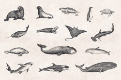 Sea Life – Vintage Engraving Illustrations 03