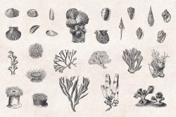Sea Life – Vintage Engraving Illustrations 05
