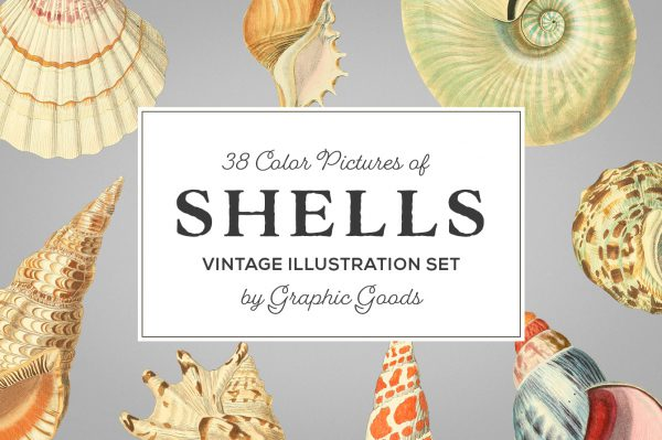 Shells – Vintage Color Illustrations 01