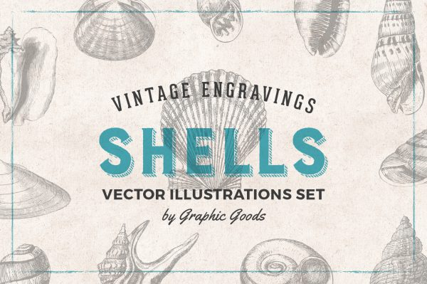 Shells – Vintage Engraving Illustrations 01