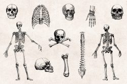 Skulls & Bones – Vintage Engraving Illustrations 02