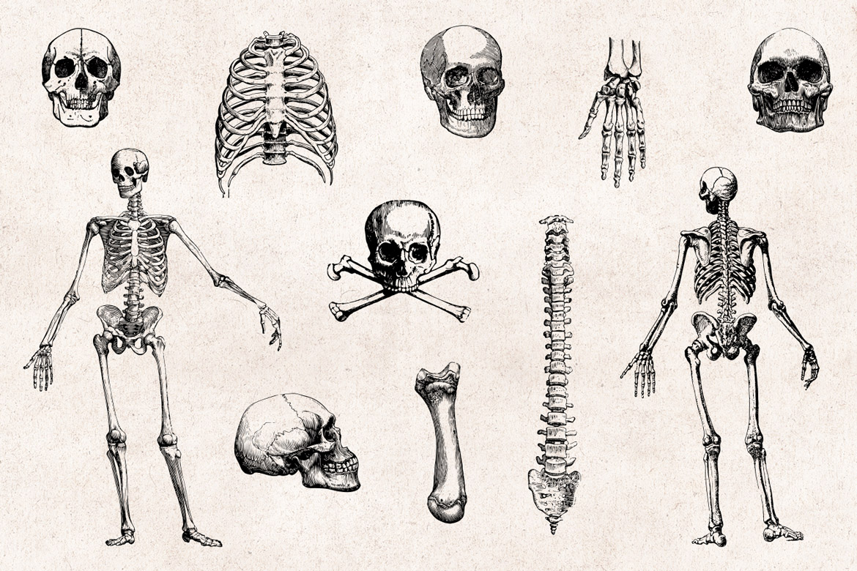 Skulls Bones Vector Engravings Set Graphic Goods