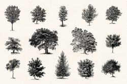Trees – Vintage Engraving Illustrations 02