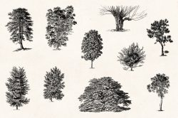 Trees – Vintage Engraving Illustrations 03