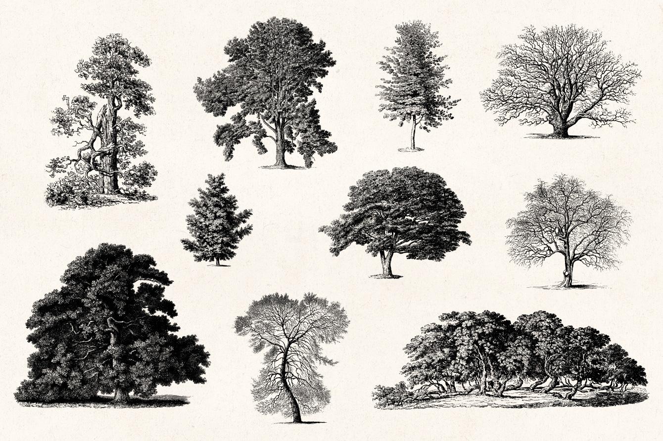 Trees Vintage Illustrations Set Graphic Goods