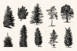 Trees – Vintage Engraving Illustrations 05