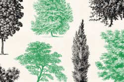 Trees – Vintage Engraving Illustrations 08