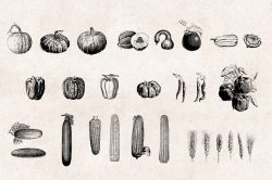 Vegetables Engraving Set 03