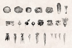 Vegetables Engraving Set 04