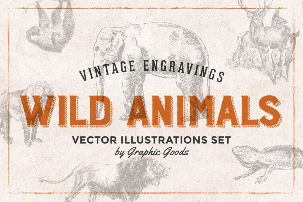 Wild Animals – Vintage Engraving Illustrations 01