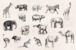 Wild Animals – Vintage Engraving Illustrations 02