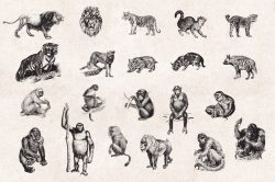 Wild Animals – Vintage Engraving Illustrations 03