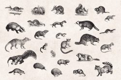 Wild Animals – Vintage Engraving Illustrations 05