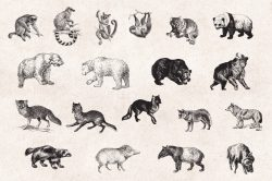 Wild Animals – Vintage Engraving Illustrations 06