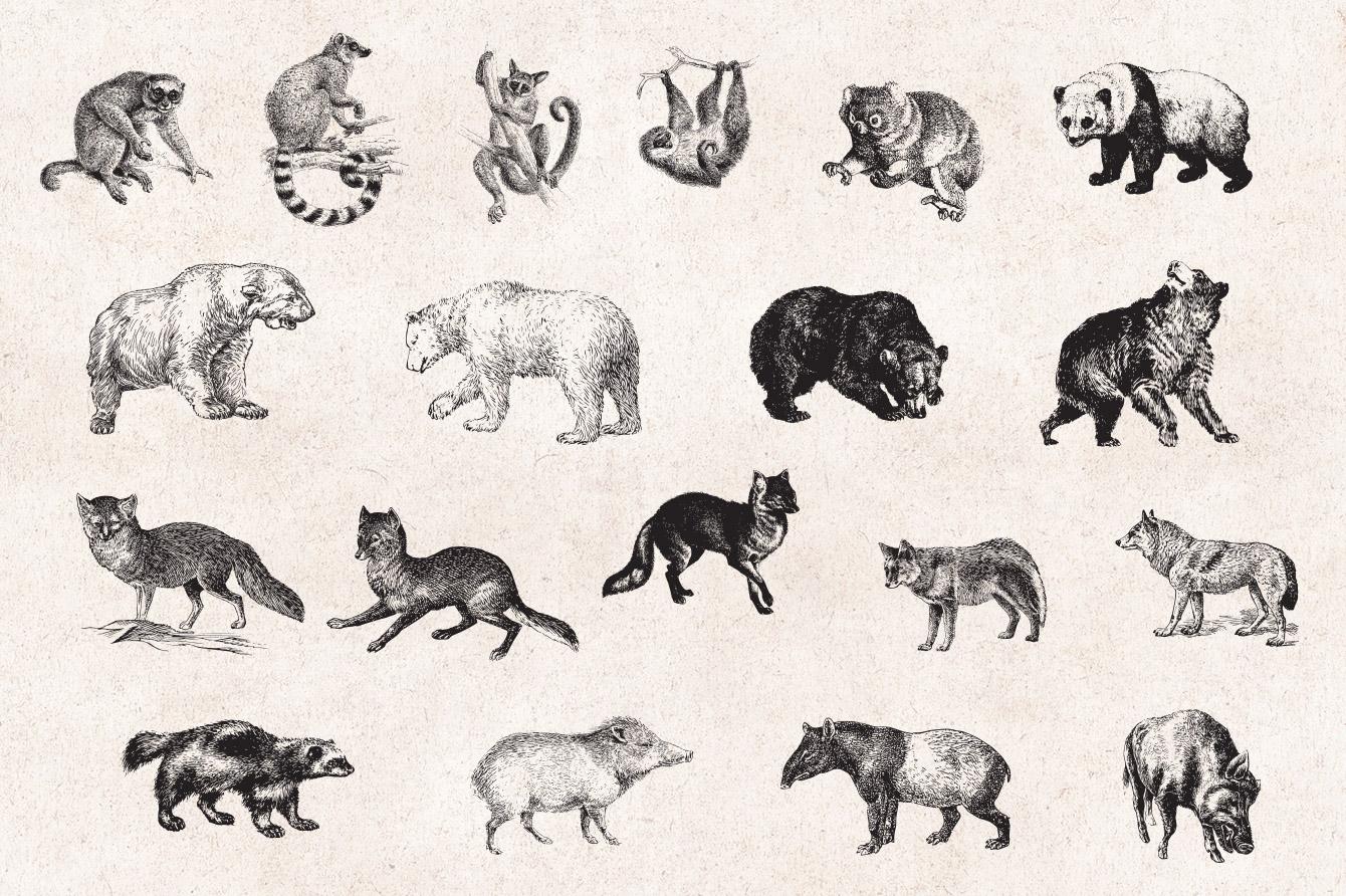 Wild Animals Engravings Set , Graphic Goods