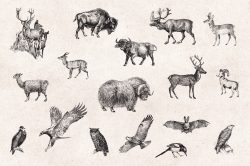 Wild Animals – Vintage Engraving Illustrations 07