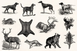 Hunting – Vintage Engraving Illustrations by Graphic Goods 06
