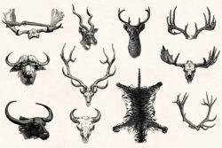 Hunting – Vintage Engraving Illustrations by Graphic Goods 07
