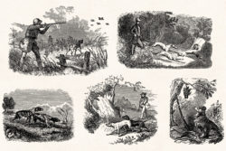 Hunting – Vintage Engraving Illustrations by Graphic Goods 10
