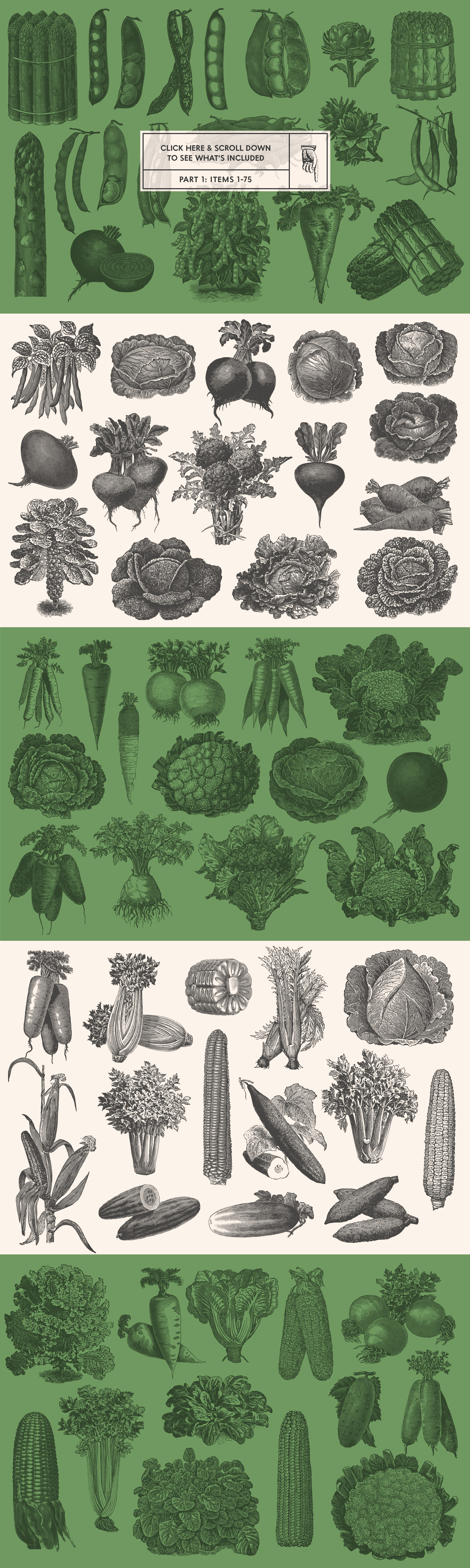 220 Vintage Vegetable Illustrations by Graphic Goods – all items preview 01