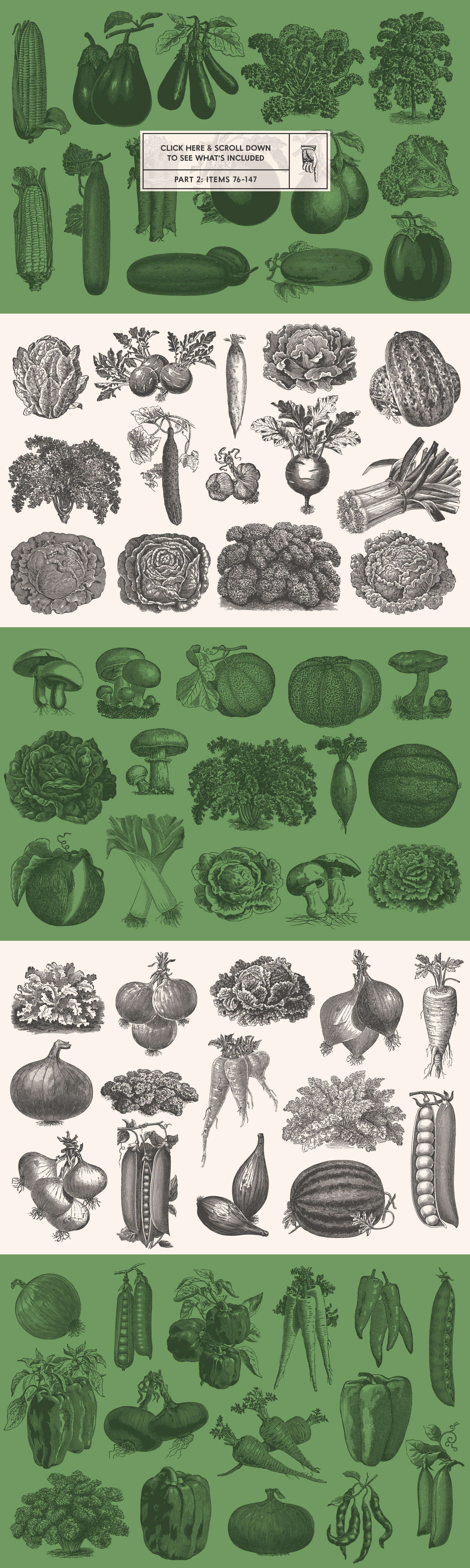 220 Vintage Vegetable Illustrations by Graphic Goods – all items preview 02
